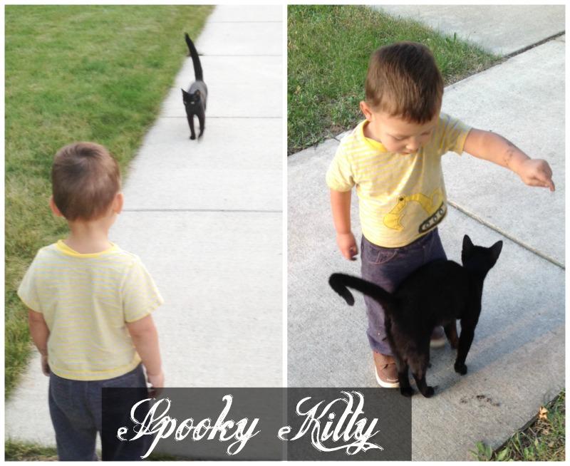 spooky kitty gus