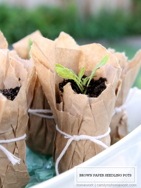 Brown-Paper--Seedling-Pots-via-homew[1]